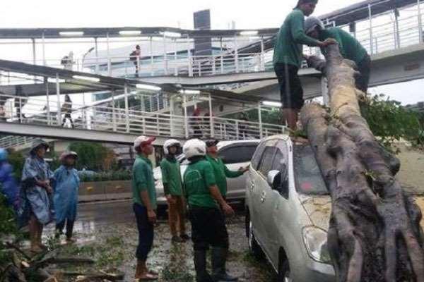 Mobil Jadi Korban Pohon Tumbang, Ada Ganti Rugi Pemerintah